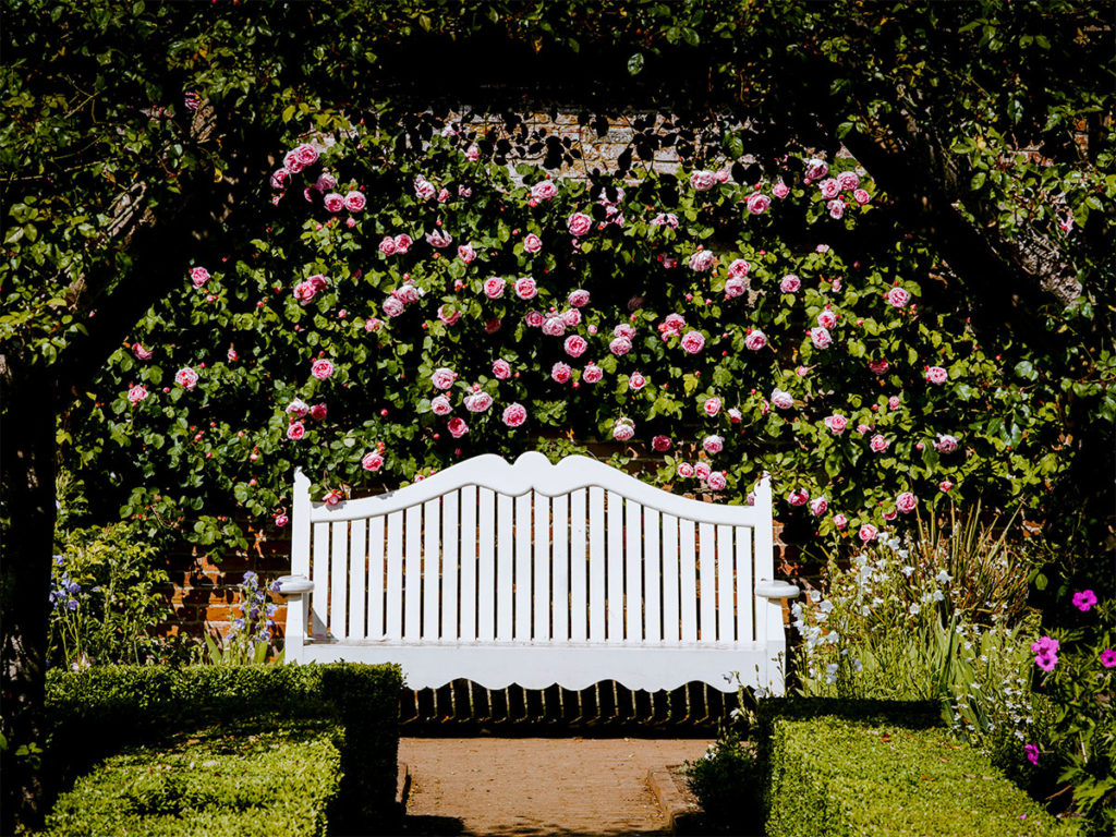 bench with roses in background